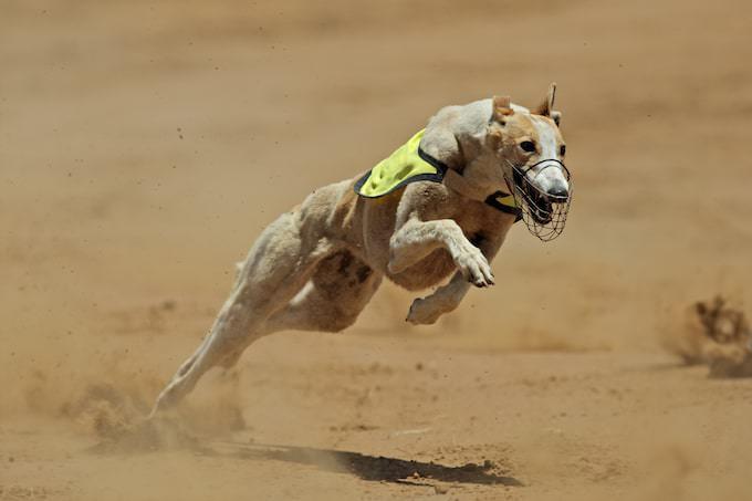 スピード感ある犬